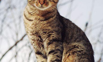 Los gatos, esos grandes desconocidos de la casa