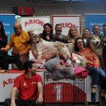 El domingo se celebra el VII Concurso Nacional Canino de Moralzarzal en la plaza de toros