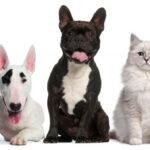 Moralzarzal estrena ordenanza de tenencia y protección de animales domésticos y de compañía