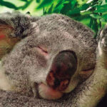 Los animales que duermen más horas